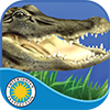 Alligator at Saw Grass Road on iTunes App Store