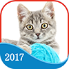 365 Cats Page-A-Day Calendar 2017 on iTunes App Store
